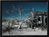 California  Cima  Mojave National Preserve  Abandoned Mojave Desert Ranch  Winter  USA