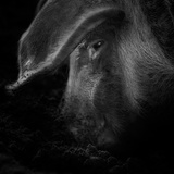 A Piggy Thing