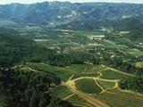 Aerial View of Vineyards in Napa Valley  California  USA