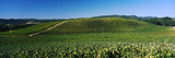 James Berry-Saxum Vineyards at Paso Robles Wine Country  California  USA