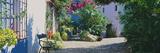 Plants at a House  Marbella  Costa Del Sol  Malaga Province  Andalusia  Spain