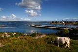 Maumeen Quay  Gorumna Island  Connemara  County Galway  Ireland