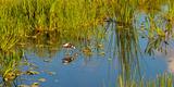 Reflection of a Bird on Water  Boynton Beach  Florida  USA