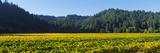 Vineyard  Russian River Valley  Sonoma  California  USA