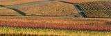 Vineyards in Autumn Near Gleisweiler  German Wine Route  Pfalz  Rhineland-Palatinate  Germany