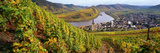 High Angle View of Vineyards with Town Along the River  Bremm  Mosel River  Calmont