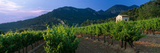 Vineyard  Provence-Alpes-Cote D'Azur  France
