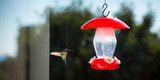 Hummingbird Hovering at Bird Feeder  California  USA