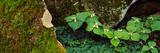 Trillium Wildflowers on Plants  Great Smoky Mountains National Park  Gatlinburg  Sevier County