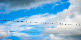 Birds Perching on a Wire  Baden-Wurttemberg  Germany