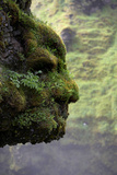 Moss Covered Rock Shaped Like a Face by Skogarfoss Waterfalls  Iceland
