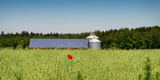 Poppy Flower in a Field and Barn with Solar Panels and Silos in the Background