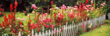 Fence with Flowers in a Garden  Coupeville  Whidbey Island  Island County  Washington State  USA