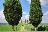 Farmhouse with Cypress Trees  Pienza  Val D'Orcia  Siena Province  Tuscany  Italy