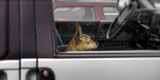 Dog Sitting on Passenger Seat in a Car  Baden-Wurttemberg  Germany