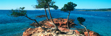 Palombaggia Beach and Trees  Corsica  France