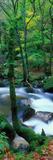 River Flowing Through a Forest  River Dart  Dartmoor National Park  Devon  England
