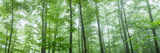 Trees in a Forest  Hamburg  New York State  USA