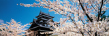 Matsue Castle Cherry Blossoms Shimane Japan