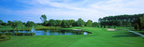 Trees in a Golf Course  Rehoboth Beach Country Club  Rehoboth Beach  Sussex County  Delaware  USA