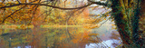 Reflection of Autumn Trees in Canal  Stroud  Gloucestershire  England