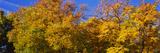 Low Angle View of Trees  Denver  Colorado  USA