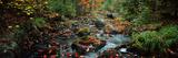Small Stream in Fall  Upper Peninsula  Michigan  USA