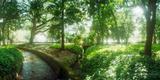 Trees in a Botanical Garden  Jardim Botanico  Zona Sul  Rio De Janeiro  Brazil