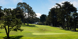 Trees in a Golf Course  Presidio Golf Course  San Francisco  California  USA