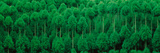 Onogo Kitayama Cedar Trees Kyoto Japan