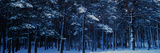 Snow Covered Pine Trees in Winter  French Riviera  Provence-Alpes-Cote D'Azur  France
