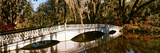 Footbridge over Swamp  Magnolia Plantation and Gardens  Charleston  South Carolina  USA