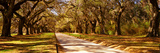 Trees in a Garden  Boone Hall Plantation  Mount Pleasant  Charleston  South Carolina  USA
