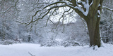 Snow Covered Trees in a Park  Hampstead Heath  North London  London  England