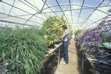 A Horticulturist Conducts Environmental Research in a Greenhouse at the University of AZ at Tucson