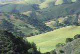 Spring Fields in Carmel Valley  California