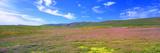 Field  Oregon  USA