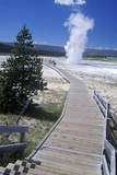 Walkway Leading to Geyser  Yellowstone National Park  Wyoming