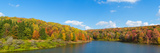 Trees in a Forest at the Lakeside  Cattaraugus County  New York State  USA