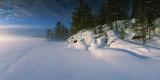 Trees Along a Frozen Lake  Saimaa  Puumala  Southern Savonia  Eastern Finland  Finland