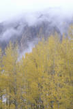 Autumn Aspen Trees and Clouds  Gunnison National Forest  Colorado