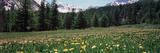 Wildflowers in a Field with Snowcapped Mountain in the Background  French Riviera