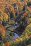 Autumn Leaves  Porcupine State Park  Michigan