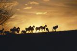 Silhouette of Herd of Horses Running on Horizon in Kentucky