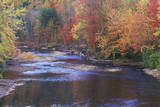 Autumn Leaves by a Stream  Adirondack Mountains  New York
