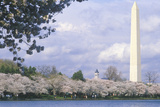 The Washington National Monument in Springtime  Washington  DC