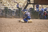 Calf Roping Competition  Inter-Tribal Ceremonial Indian Rodeo  Gallup NM