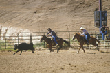 Calf Roping  Inter-Tribal Ceremonial Indian Rodeo  Gallup NM