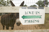 Donkey and Fence with Sign for Directions to Wedding Parking  Ojai  CA