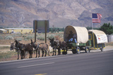 Mule Team and Wagon on Freeway Near Bishop  CA